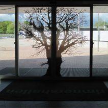 In-trädet